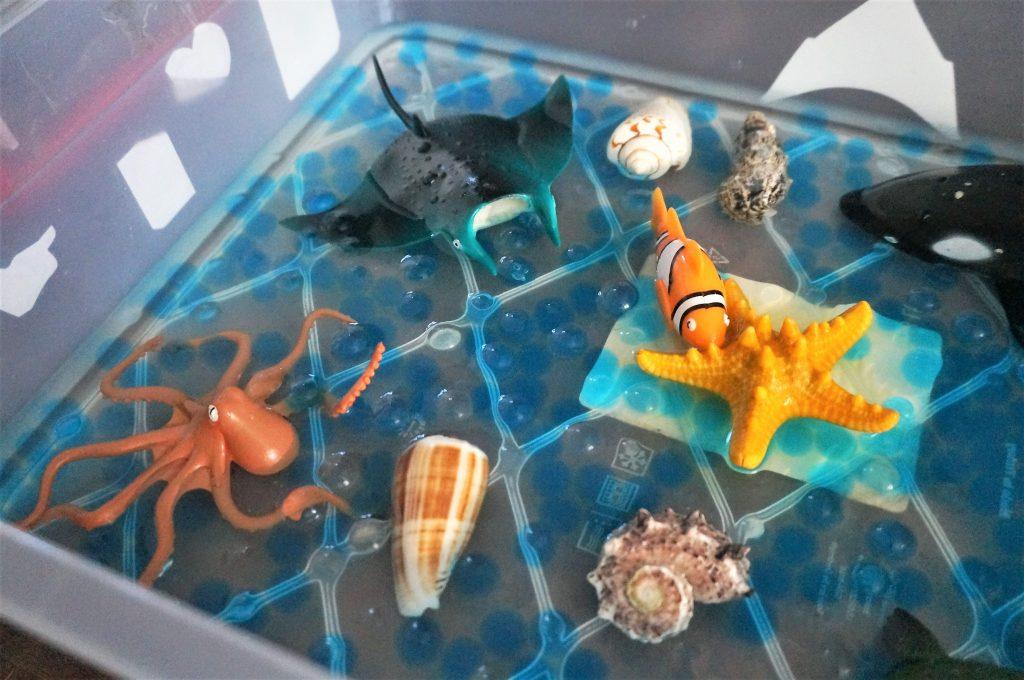 cutie senzoriala animale marine