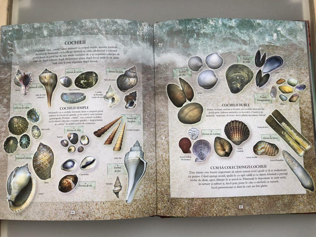 tipuri de cochilii, explorare în natură