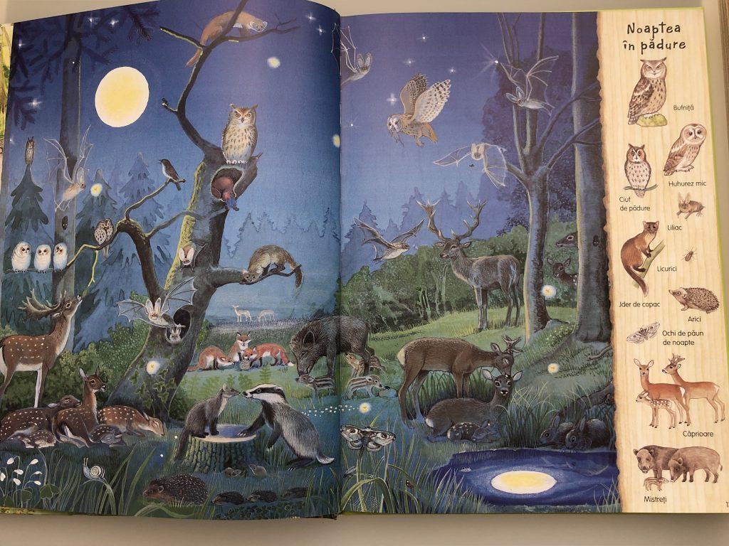 Marea carte a naturii, ce se întâmplă noaptea in pădure