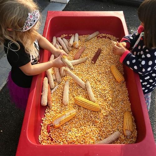 activități senzoriale-copii care curata porumb