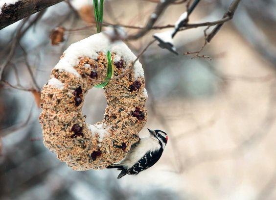 Hrănitori pentru păsări – un proiect ușor și foarte util