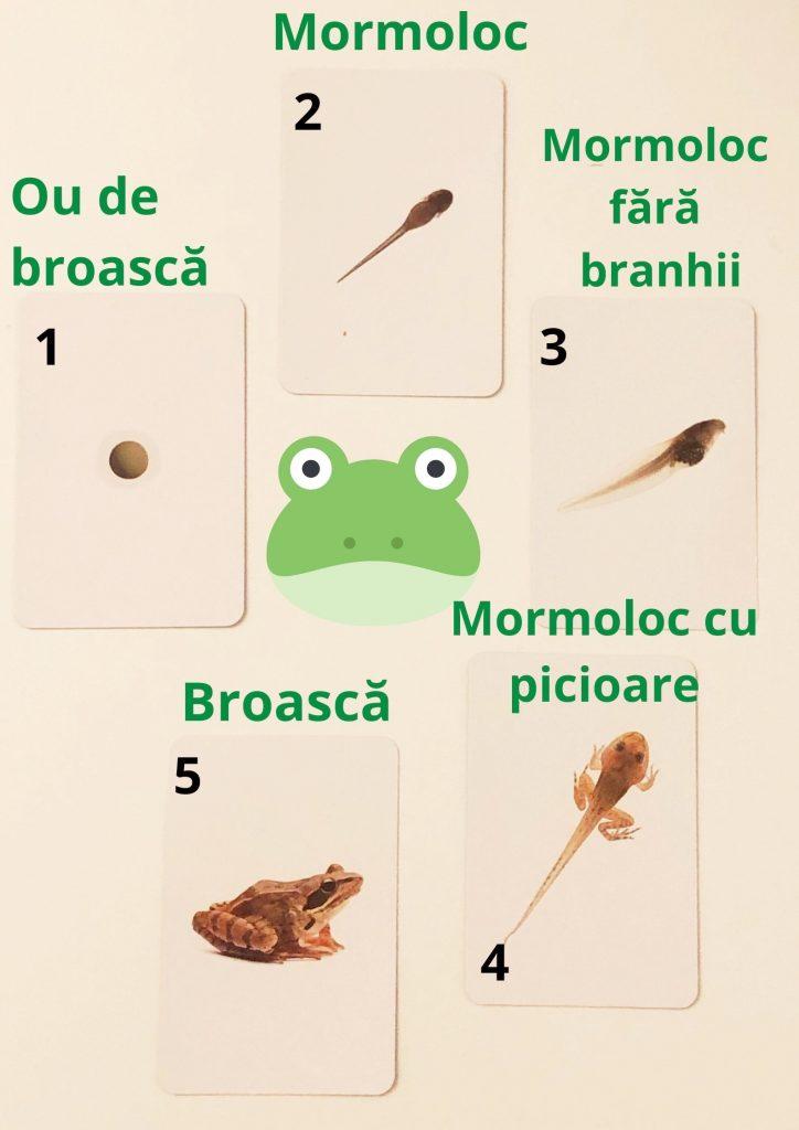broscuțe